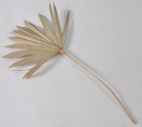 """Palmspeer natur ca. 52 cm """"10541011400"""""""